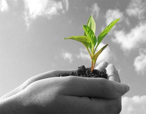 تصویب ۹ طرح در ستاد تسهیلات بخش کشاورزی رفسنجان