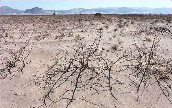 خسارت ۴۸۰ میلیاردی به باغات پسته رفسنجان