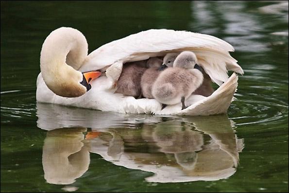 مادردوست داشتنی