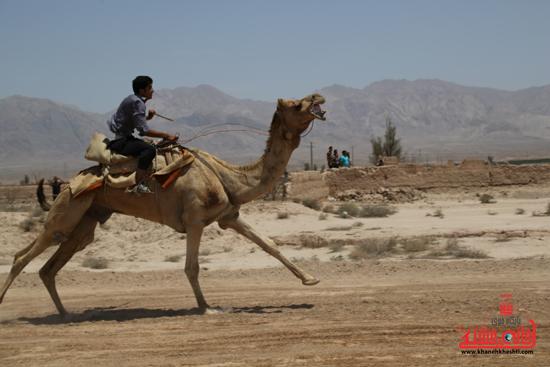 دوربین خانه خشتی/مسابقات شتر سواریِ هشتمین جشنواره ورزش های بومی محلی در بهرمانِ رفسنجان