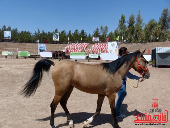 مسابقات زیبایی اسبان اصیل بومی فلات ایران- رفسنجان (11)