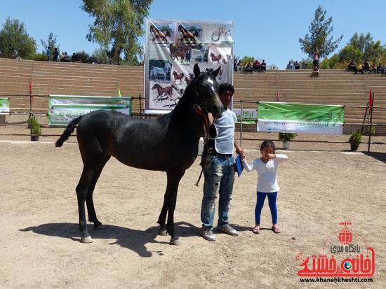 مسابقات زیبایی اسبان اصیل بومی فلات ایران- رفسنجان (14)