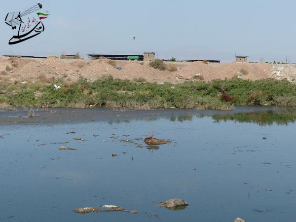 تخلیه غیربهداشتی فاضلاب در چند متری منازل مردم رفسنجان (3)