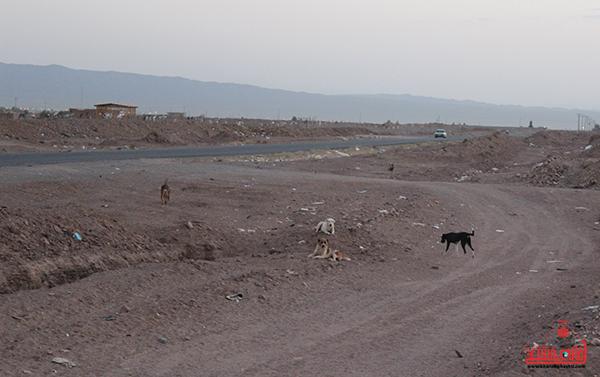 روستای احمدآباد رضوی رفسنجان37