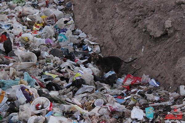 روستای احمدآباد رضوی رفسنجان39