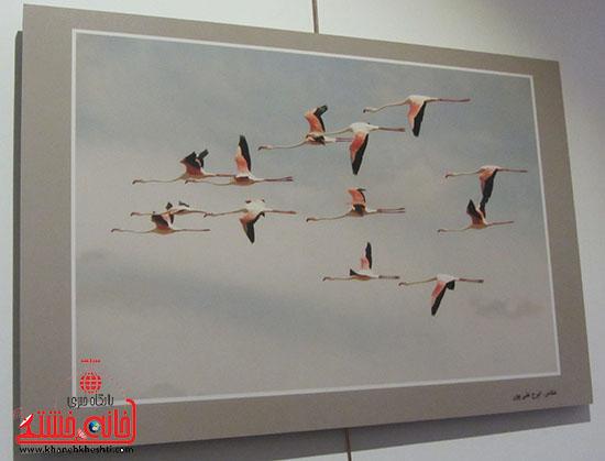 نمایشگاه عکس،رفسنجان،خانه خشتی.jpg (8)