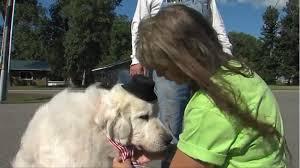 یک سگ ۷ ساله شهردار یکی از شهرهای آمریکا شد +عکس