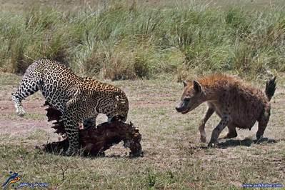 تصاویر دیدنی از دنیای حیوانات