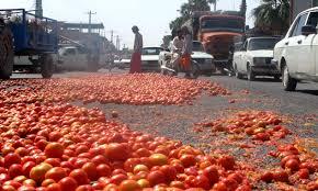 افزایش قیمت گوجه فرنگی-رفسنجان