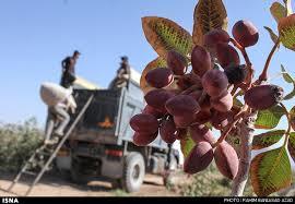 یازده هزار و 200 تن صادرات از رفسنجان