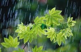 بارش باران قبل از موعد