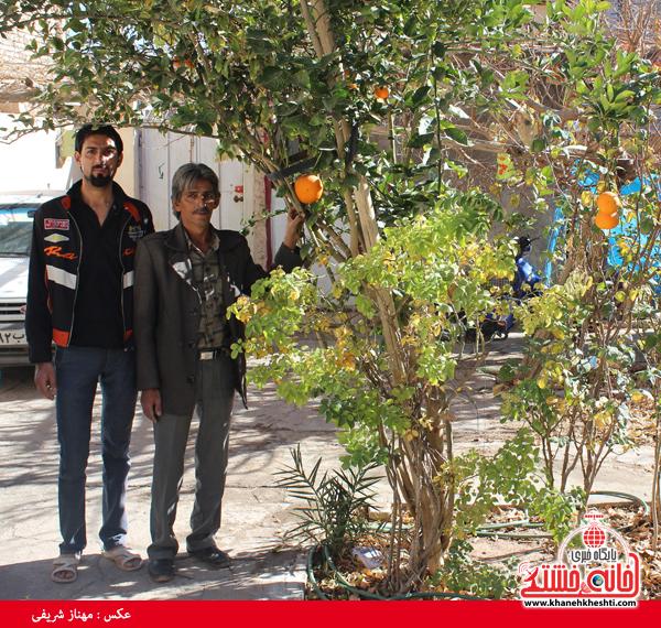 درخت پرتقال در خانه شهروند رفسنجانی