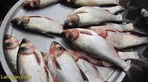 از ماهی فروشان سیار ماهی نخرید