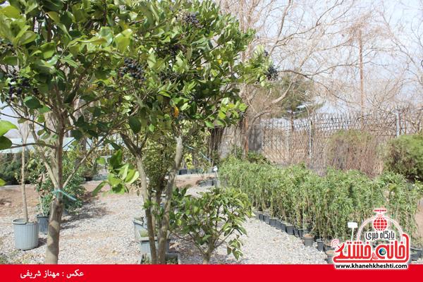 نمایشگاه بهاره گل و گیاه رفسنجان-خانه خشتی۱۳