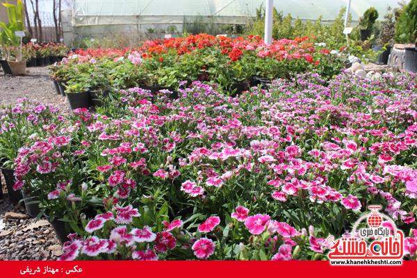 نمایشگاه بهاره گل و گیاه رفسنجان-خانه خشتی۱۶
