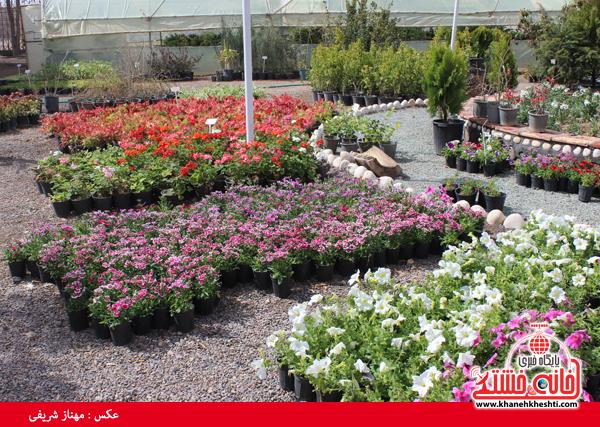 نمایشگاه گل و گیاه در نهالستان شهرداری رفسنجان برپا شد+عکس