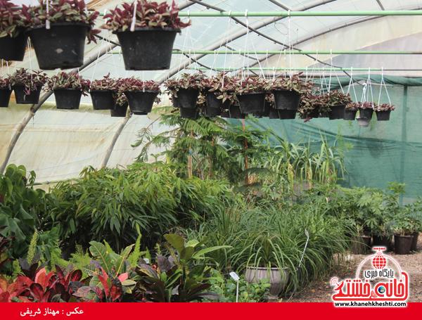 نمایشگاه بهاره گل و گیاه رفسنجان-خانه خشتی۷