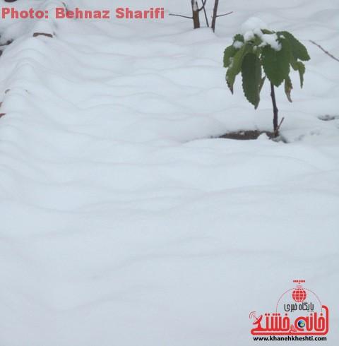 برف زمستانه در رفسنجان_خانه خشتی (۳)