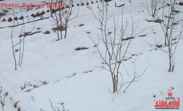 برف زمستانه در رفسنجان_خانه خشتی