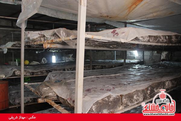 کارگاه تولید کود ورمی کمپوست در رفسنجان به بهره برداری رسید