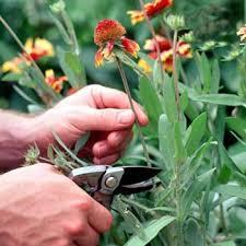 کارگاه آموزشی پرورش گیاه در رفسنجان برگزار شد