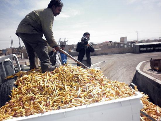 فرآورده های خام دامی فاسد در شهرستان رفسنجان ضبط و معدوم گردید
