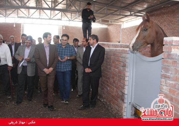 کارگاه پرورش اسب در رفسنجان افتتاح شد + عکس