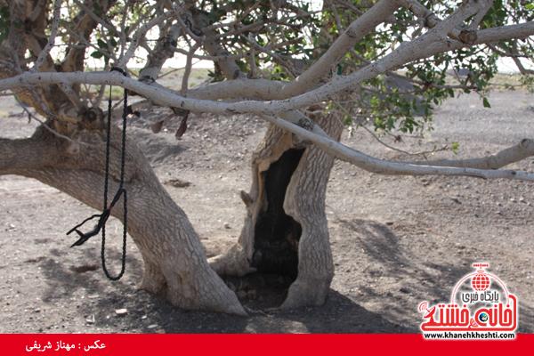 درخت کهنسال-ناصریه-رفسنجان-خانه خشتی (۴)