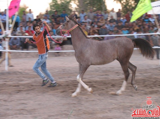شو اسب سواره شهر صفائیه-رفسنجان-خانه خشتی (۱۷)