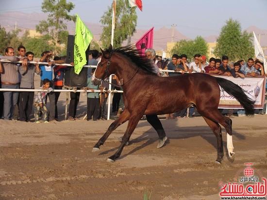 شو اسب سواره شهر صفائیه-رفسنجان-خانه خشتی (۴)