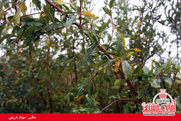 باران-رفسنجان-خانه خشتی (۱۳)