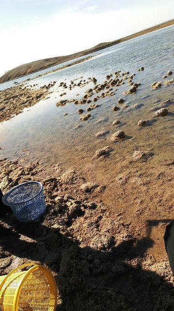 حریم دریاچه شور جوادیه فلاح رفسنجان پاکسازی شد