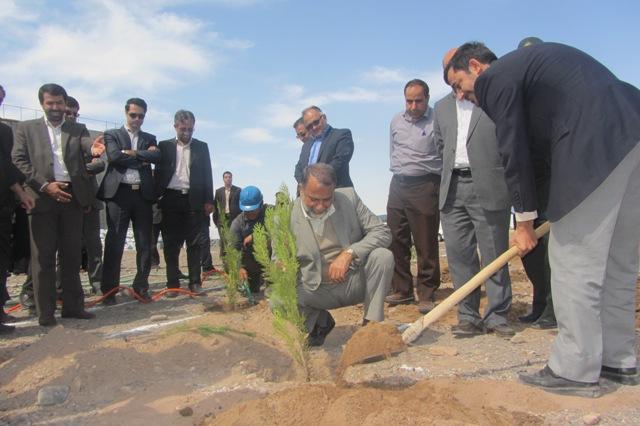 گرامیداشت روز درختکاری در پروژه در حال احداث دانشگاه حضرت نرجس(س) رفسنجان / تصاویر