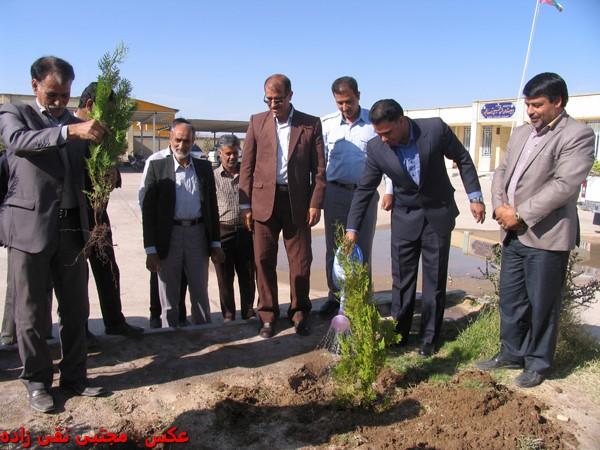 مسئولین بخش فردوس روز درختکاری را گرامی داشتند / عکس