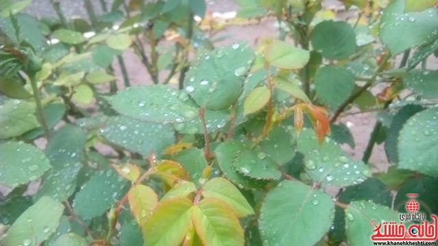 باران بهاری-خانه خشتی-رفسنجان