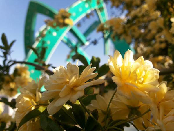 طبیعت بهاری دانشگاه ولیعصر(عج) رفسنجان در قاب دوربین خانه خشتی
