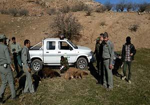 برخورد قاطعانه پاسگاه ویژه حفاظت رفسنجان با دامداران متخلف و متصرفین اراضی ملی