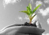 امید به زندگی موتور پیشران توسعه است