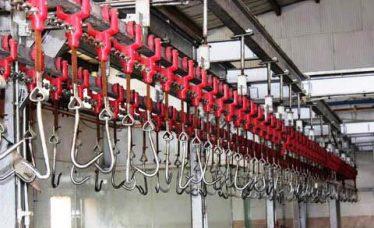 اقدامات لازم جهت ترمیم و بهسازی کشتارگاه رفسنجان انجام شد