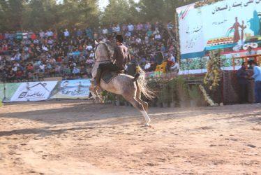 جشنواره زیبایی اسب در رفسنجان برگزار شد / تصاویر