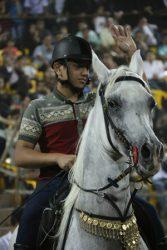 56 فرم عکس از اسب های زیبای رفسنجان