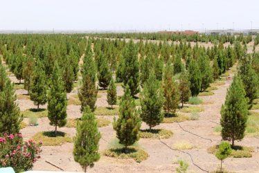 احداث پارک جنگلی 300 هکتاری در رفسنجان