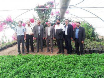 سازمان پارکها و فضای سبز شهرداری رفسنجان در تولید نشاء فصلی در استان بی نظیر است