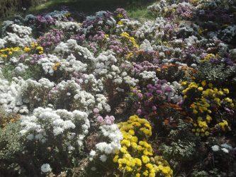 تولید سالانه بیش از ۱۰ میلیون نشاء از انواع گل های مختلف در نهالستان شهرداری