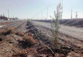 تکمیل عملیات درختکاری بلوار خلیج فارس