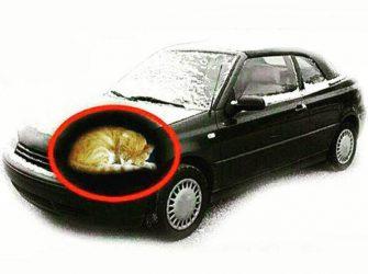 در روزهای سرد از نبود حیوانات اهلی پناه برده در موتور خودرو اطمینان حاصل کنید