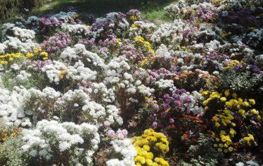 کاشت بیش از ۵ میلیون نشاء از انواع گل های مختلف در سطح شهر رفسنجان