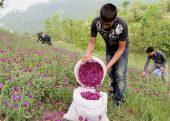 پرورش بلدرچین و کبک و کاشت گیاهان دارویی درآمد اقتصادی بالایی دارد