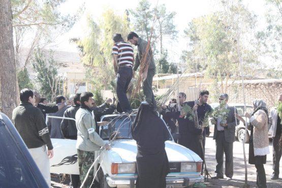 توزیع رایگان ۱۵ هزار اصله درخت در ۸ نقطه شهر رفسنجان