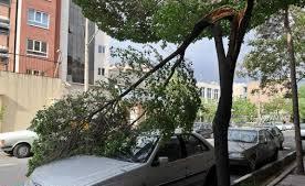 قطع و شکسته شدن ۶۱ اصله درخت در رفسنجان بر اثر وزش باد